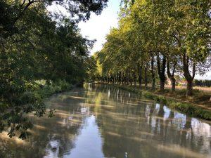 Platanenallee am Canal du Midi